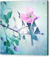 Wild Beauty Acrylic Print