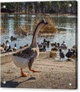 Wild Birds #1 Acrylic Print
