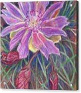 Wild Bitterroot Flower Acrylic Print