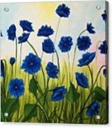 Wild Blue Poppies Acrylic Print
