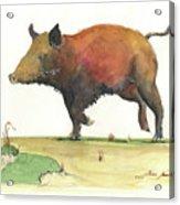 Wild Boar Delgadin Acrylic Print