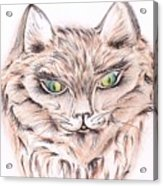 Wild- Brown Hair Cat Acrylic Print