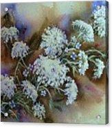 Wild Carrot -queen Anne's Lace Vignette   Acrylic Print