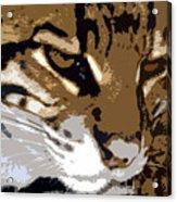 Wild Cat Acrylic Print