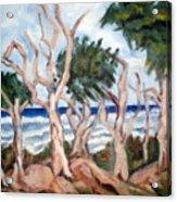 Wild Coast Acrylic Print