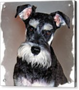 Wild Cody Wyo Acrylic Print