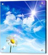 Wild Daisy In The Grass Against Bleu Sky Acrylic Print