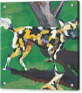 Wild Dogs Acrylic Print