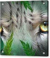 Wild Eyes - Snow Leopard Acrylic Print