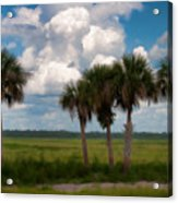 Wild Florida Acrylic Print