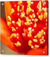 Wild Flower 2227 Acrylic Print