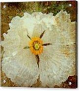 Ivory White Wildflower  Acrylic Print