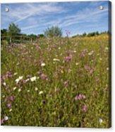 Wild Flower Meadow Acrylic Print