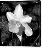 Wild Flower Oklahoma Acrylic Print