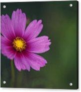 Wild Flower Acrylic Print