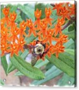 Wild Flowers And Bumble Bees Acrylic Print