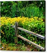 Wild Flowers And Fence Acrylic Print