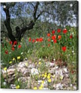 Wild Flowers And Olive Tree Acrylic Print