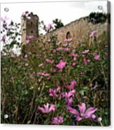 Wild Flowers At The Old Fortress Acrylic Print