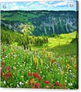 Wild Flowers Blooming On Mount Rainier Acrylic Print