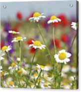 Wild Flowers Field Nature Spring Scene Acrylic Print