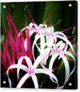 Wild Flowers In Hawaii Acrylic Print