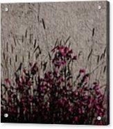 Wild Flowers On The Wall Acrylic Print
