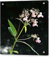 Wild Flowers Over Stream Acrylic Print