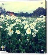 Wild Flowers White Acrylic Print