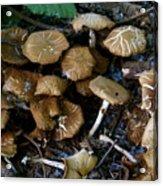 Wild Forest Mushroom Patch Acrylic Print