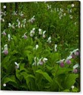 Wild Garden #1 Acrylic Print