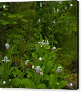 Wild Garden #2 Acrylic Print