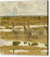 Wild Geese In The Marsh Acrylic Print