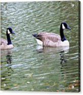 Wild Geese On A Lake 6 Acrylic Print