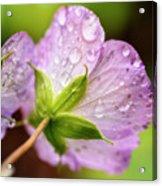 Wild Geranium After The Rain Acrylic Print