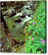 Wild Geraniums On Bradley Fork Acrylic Print