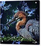 Wild Goliath Herona Acrylic Print