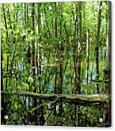 Wild Goose Woods Pond Iv Acrylic Print
