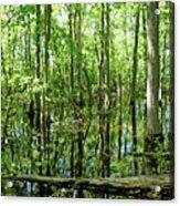 Wild Goose Woods Pond Vii Acrylic Print