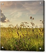 Wild Grass And A Lonely Cloud Acrylic Print