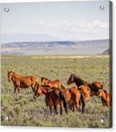 Wild Horse Mesa Acrylic Print