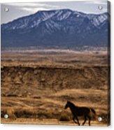 Wild Horse On The Run Acrylic Print