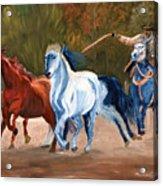 Wild Horse Roundup Acrylic Print
