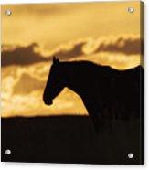 Wild Horse Sunrise Acrylic Print