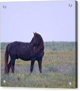 Wild Horses #4 Acrylic Print