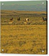 Wild Horses And Antelope-signed-#2216 Acrylic Print