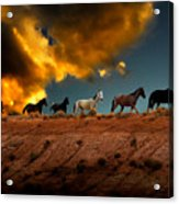 Wild Horses At Sunset Acrylic Print by Harry Spitz