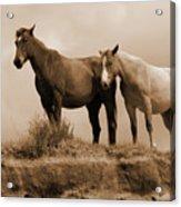 Wild Horses In Western Dakota Acrylic Print
