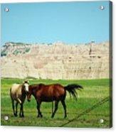 Wild Horses Of South Dakota Acrylic Print