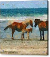 Wild Horses Of The Outer Banks Acrylic Print